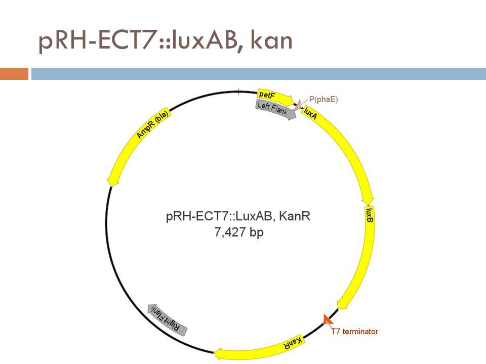 pRH-ECT7::luxAB, kan