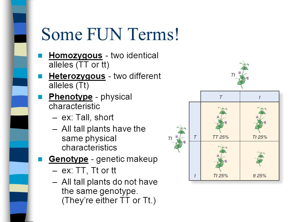 Some FUN Terms.