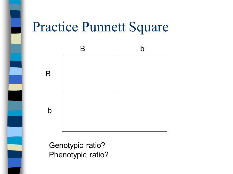 Practice Punnett Square B b Bb Genotypic ratio? Phenotypic ratio?