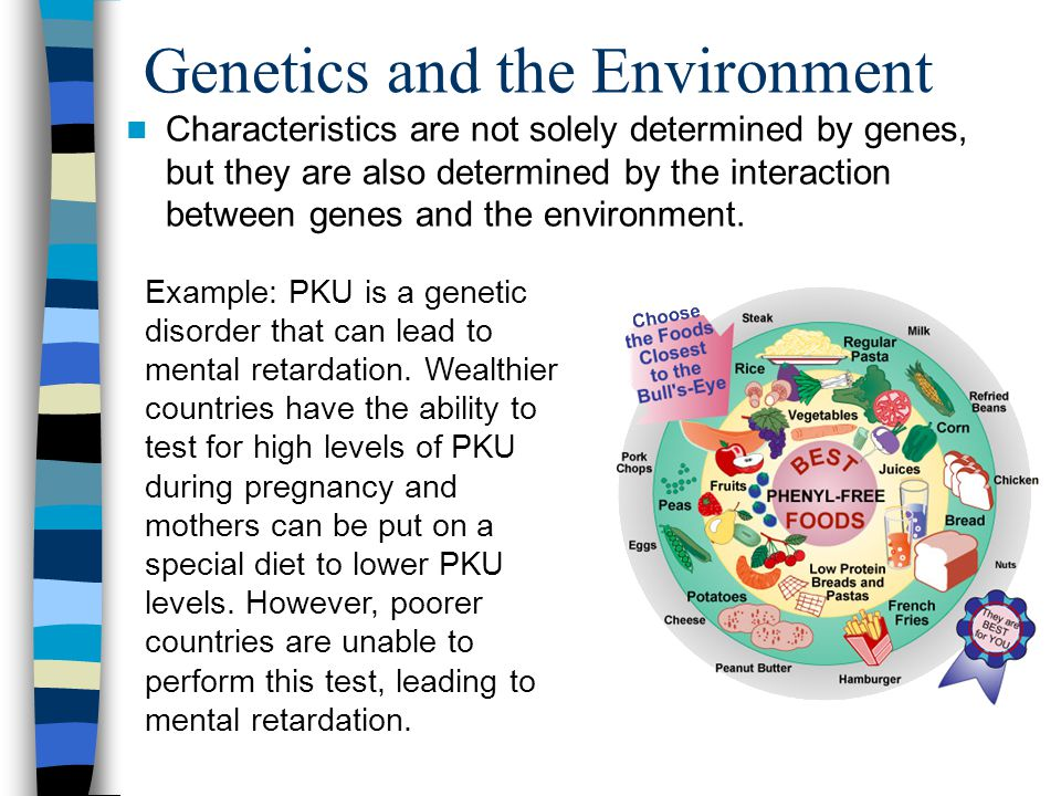 Genetics and the Environment Characteristics are not solely determined by genes, but they are also determined by the interaction between genes and the environment.