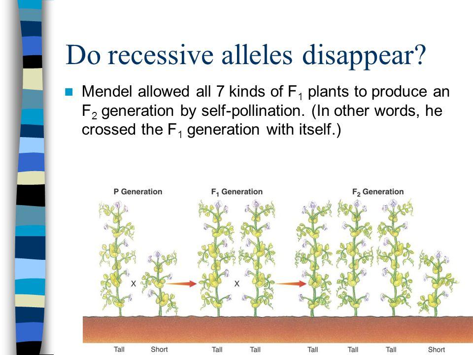 Do recessive alleles disappear.