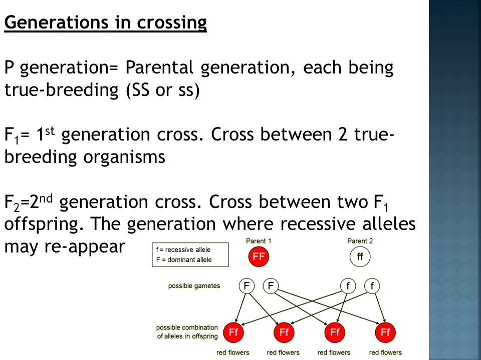 Generations in crossing P generation= Parental generation, each being true-breeding (SS or ss) F 1 = 1 st generation cross. Cross between 2 true- bree