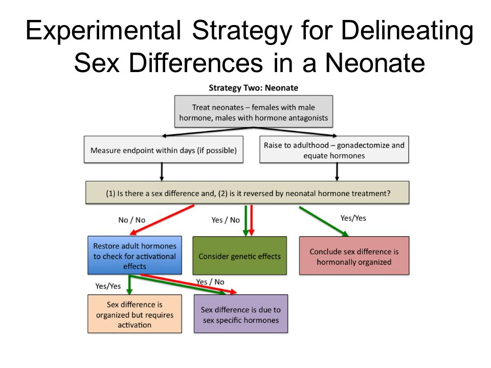 Experimental Strategy for Delineating Sex Differences in a Neonate
