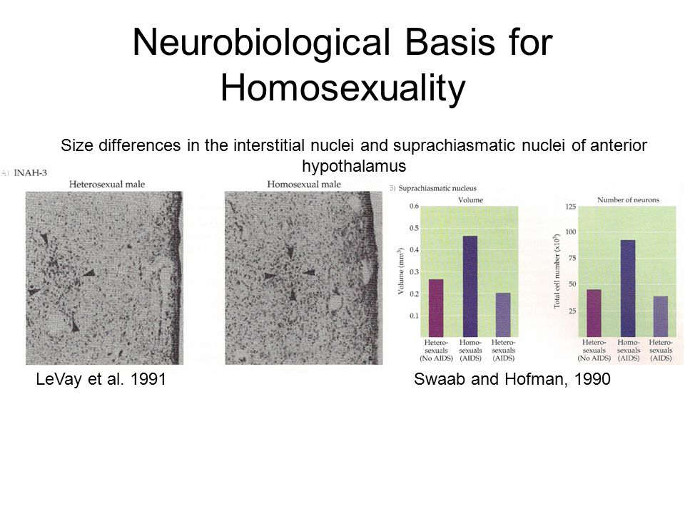 Neurobiological Basis for Homosexuality LeVay et al. 1991 Size differences in the interstitial nuclei and suprachiasmatic nuclei of anterior hypothala