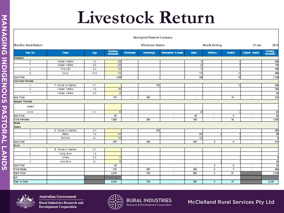 STRENGTHS Livestock Return Aboriginal Pastoral Company Monthly Stock Return Whichone Station Month Ending31-Jan2013 Year No.ClassAge Opening Numbers PurchasesBrandingsRecoveries /LossesSalesRationsDeathsAdjust- ments Closing Numbers Breeders 2Maiden Heifers1-2 220 10 2 208 1Maiden Heifers2-3 200 20 2 178 0First Calf3-4 180 10 2 168 9CowsMxd 700 100 12 588 Sub Total 1,300 - - - 140 - 18 - 1,142 Unjoined Females 3F.