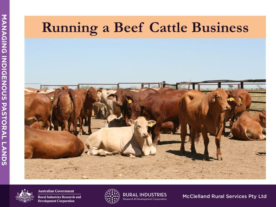 Running a Beef Cattle Business