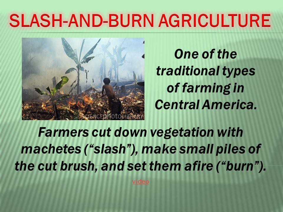 Farmers cut down vegetation with machetes ( slash ), make small piles of the cut brush, and set them afire ( burn ).