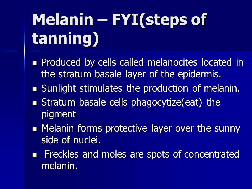 Melanin – FYI(steps of tanning) Produced by cells called melanocites located in the stratum basale layer of the epidermis. Produced by cells called me