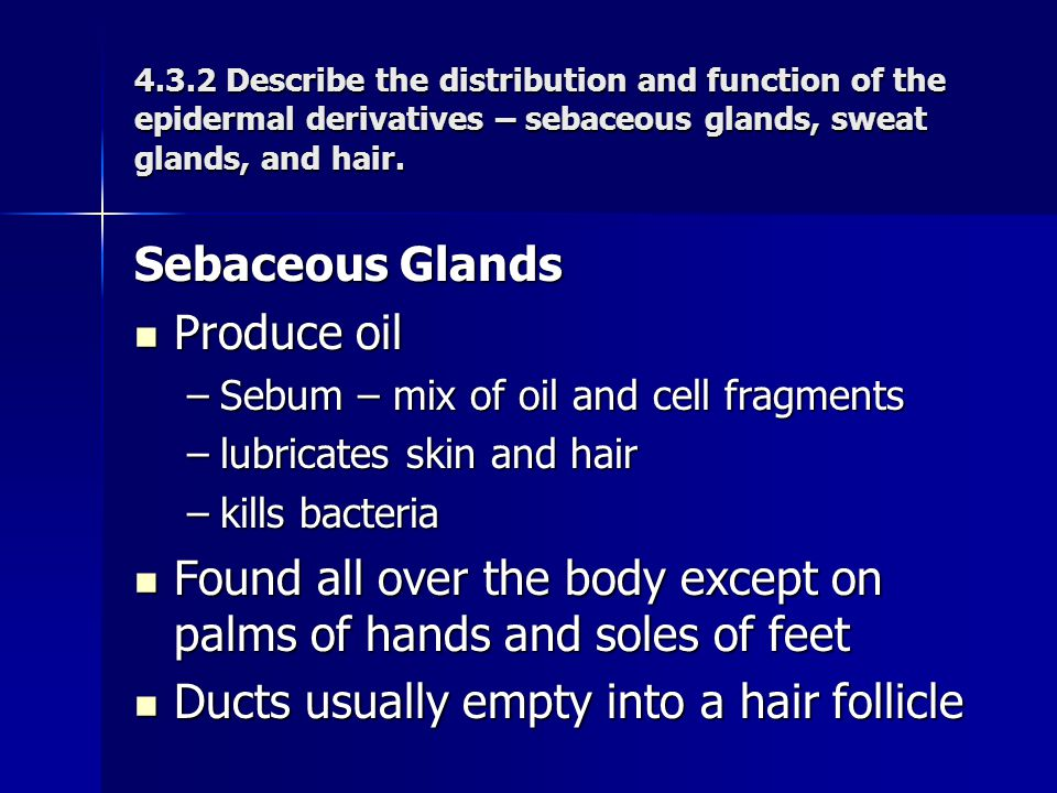 Sebaceous Glands Produce oil Produce oil –Sebum – mix of oil and cell fragments –lubricates skin and hair –kills bacteria Found all over the body exce