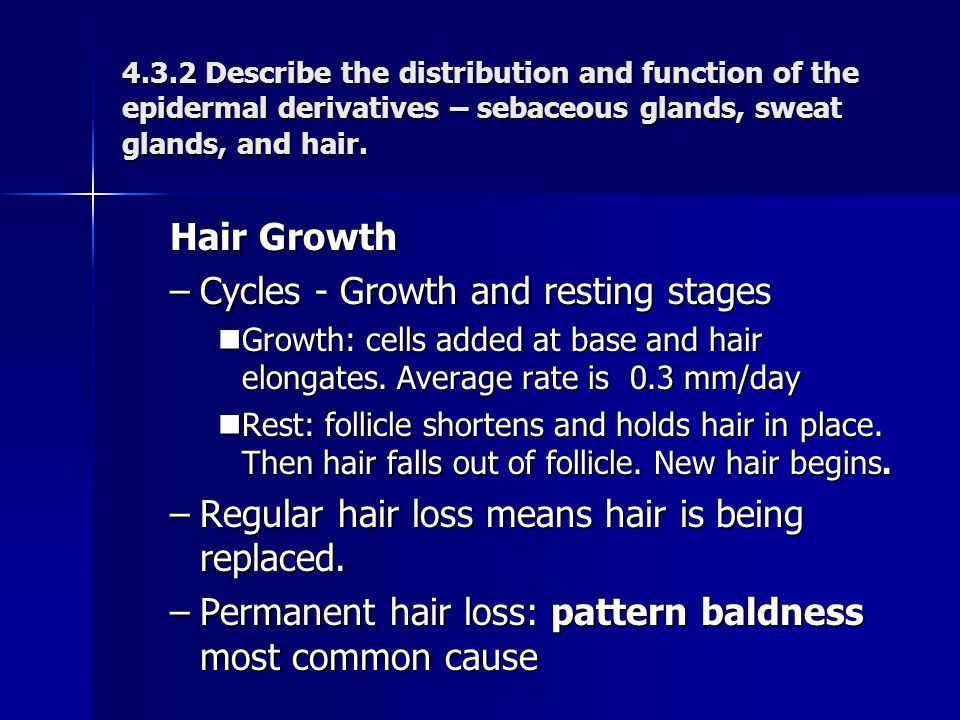 Hair Growth –Cycles - Growth and resting stages Growth: cells added at base and hair elongates. Average rate is 0.3 mm/day Growth: cells added at base