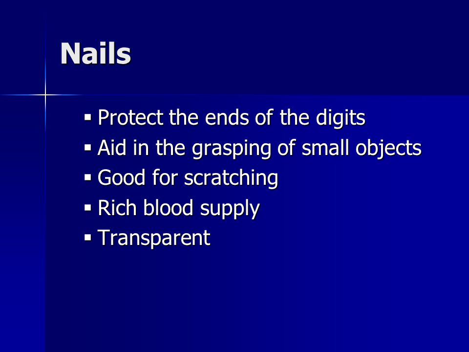 Nails  Protect the ends of the digits  Aid in the grasping of small objects  Good for scratching  Rich blood supply  Transparent