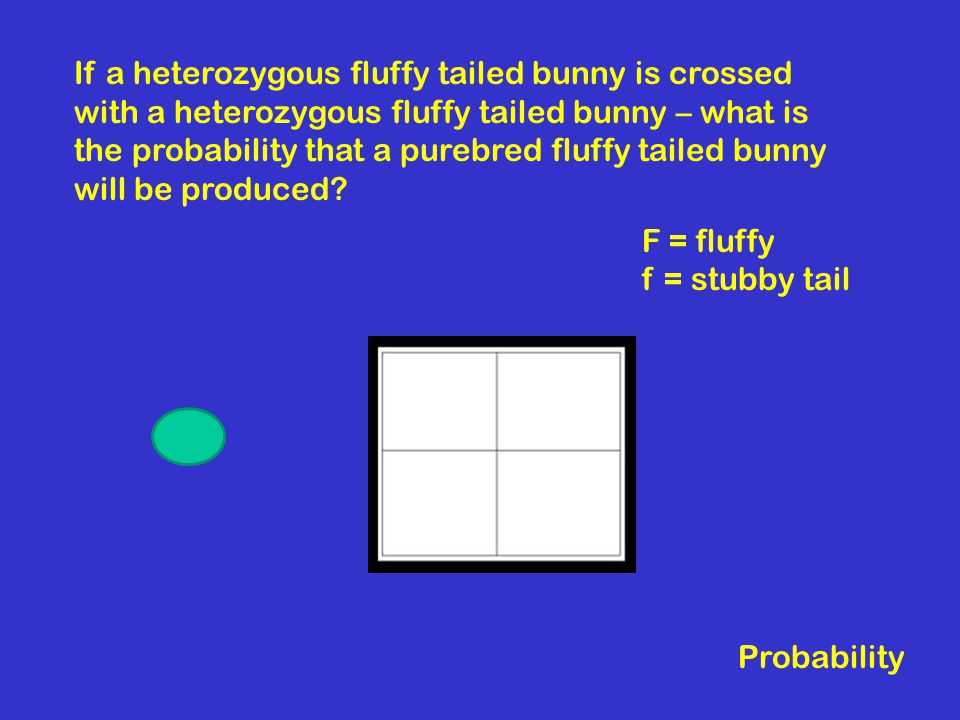 If a heterozygous fluffy tailed bunny is crossed with a heterozygous fluffy tailed bunny – what is the probability that a purebred fluffy tailed bunny will be produced.
