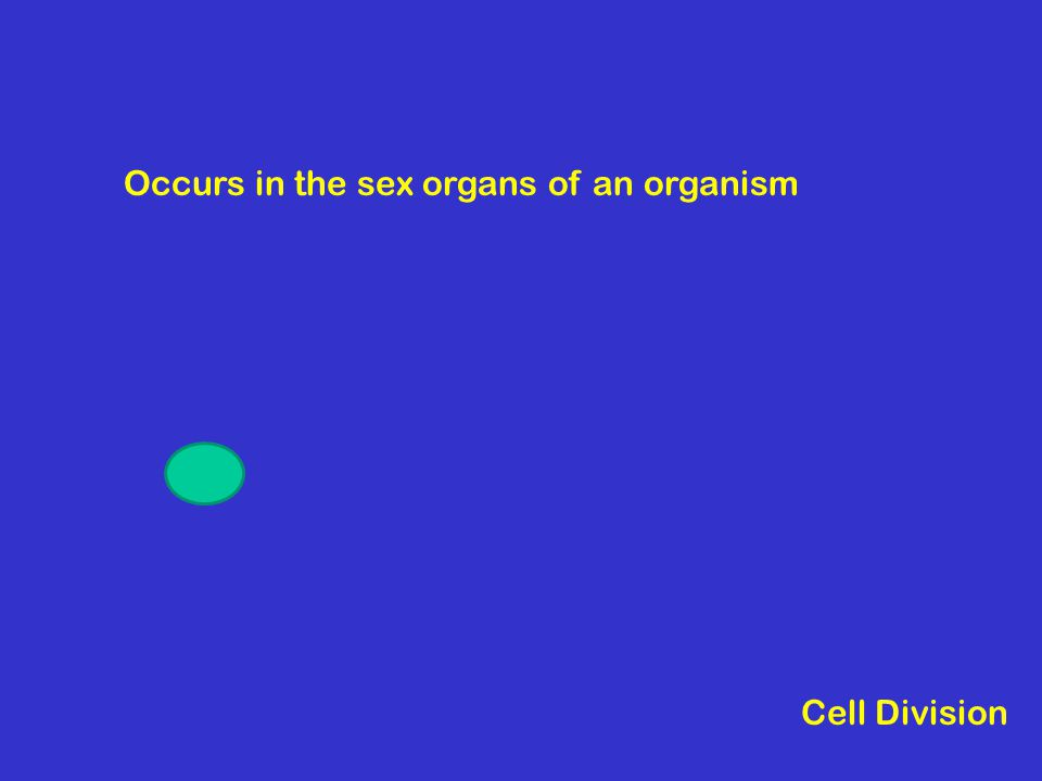 Occurs in the sex organs of an organism Cell Division