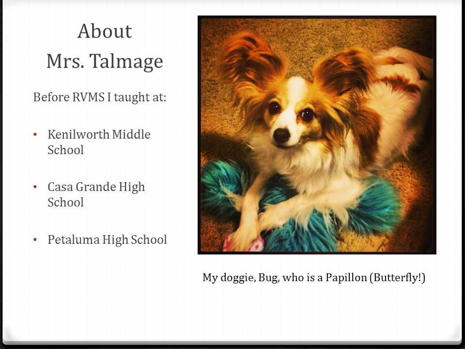 About Mrs. Talmage Before RVMS I taught at: Kenilworth Middle School Casa Grande High School Petaluma High School My doggie, Bug, who is a Papillon (B