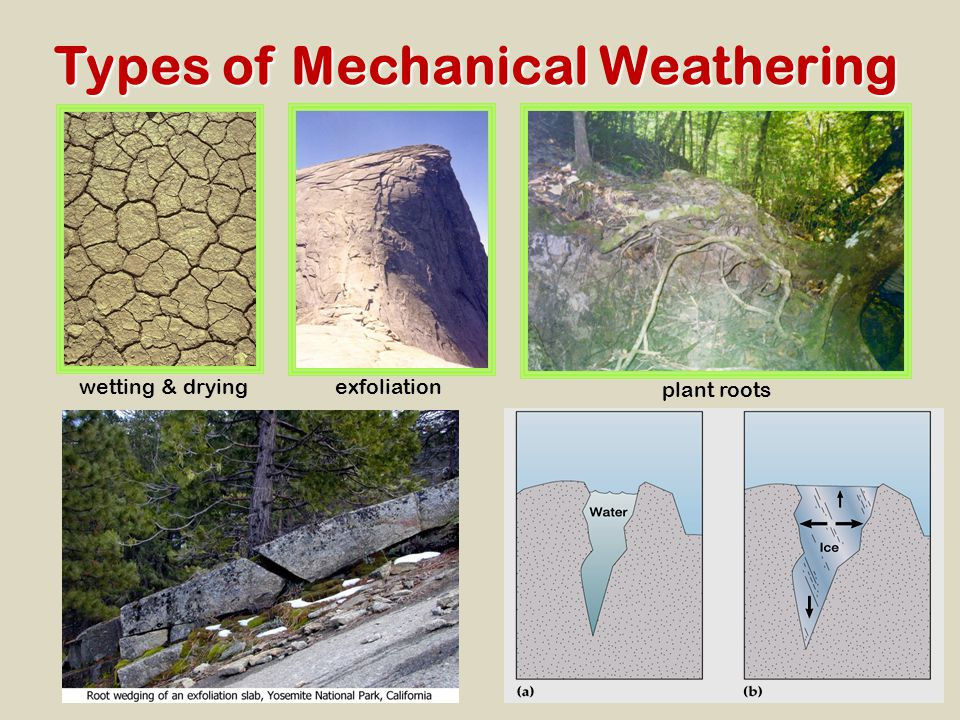 Types of Mechanical Weathering wetting & dryingexfoliation plant roots