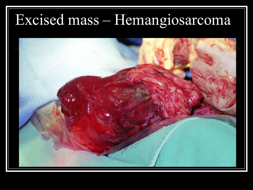 Excised mass – Hemangiosarcoma