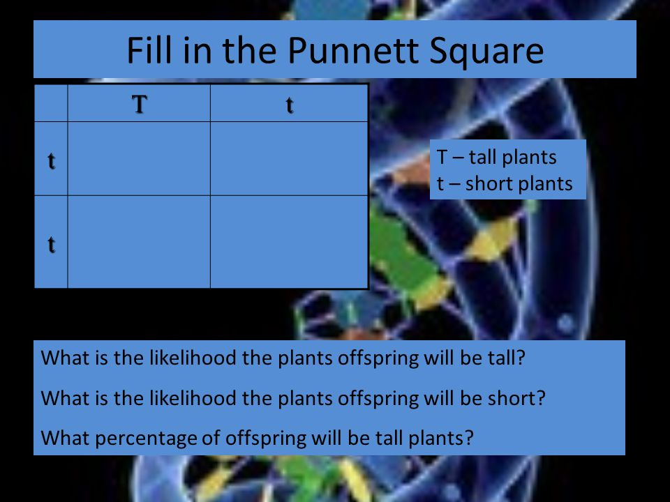 Fill in the Punnett Square Tt t t What is the likelihood the plants offspring will be tall.