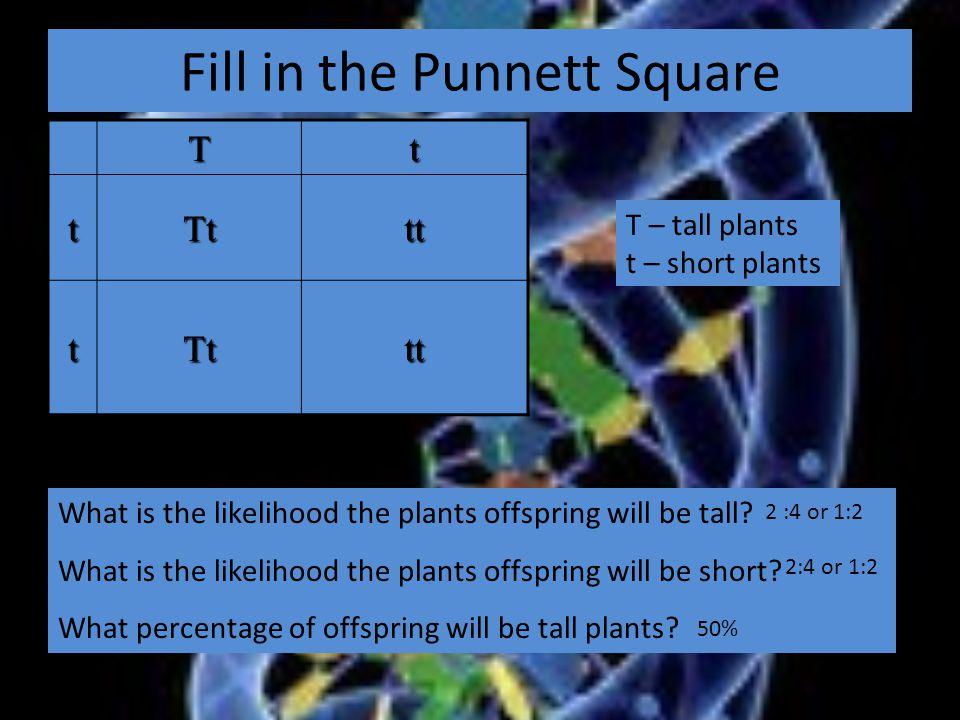 Fill in the Punnett Square Tt tTttt tTttt What is the likelihood the plants offspring will be tall.