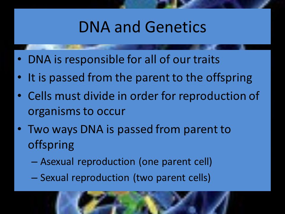 DNA and Genetics DNA is responsible for all of our traits It is passed from the parent to the offspring Cells must divide in order for reproduction of organisms to occur Two ways DNA is passed from parent to offspring – Asexual reproduction (one parent cell) – Sexual reproduction (two parent cells)