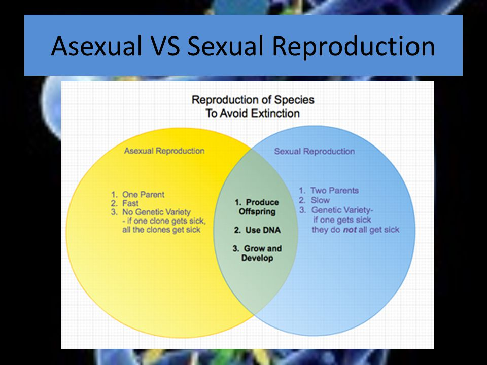 Asexual VS Sexual Reproduction