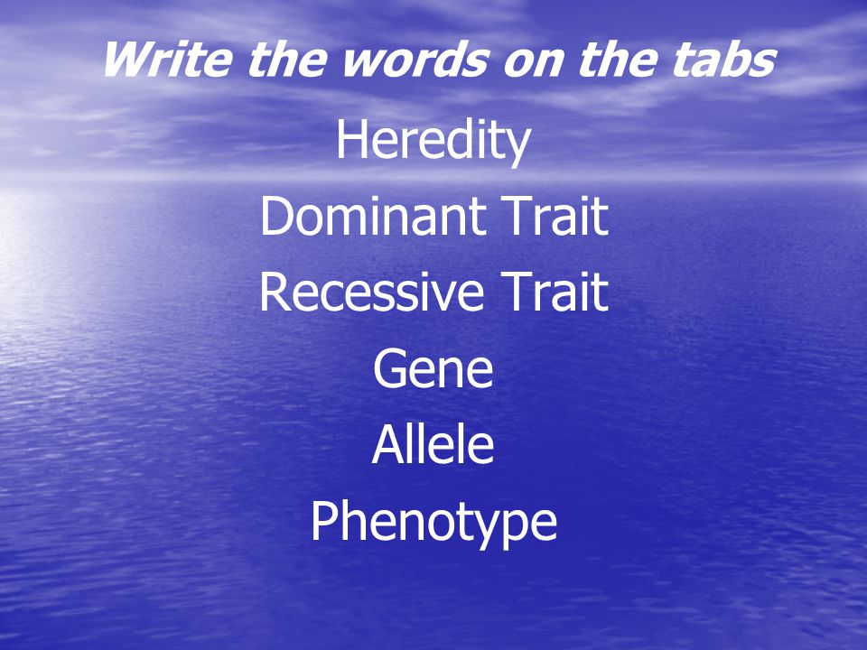 Write the words on the tabs Heredity Dominant Trait Recessive Trait Gene Allele Phenotype
