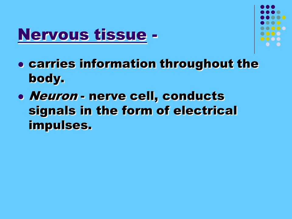 Nervous tissue - carries information throughout the body.