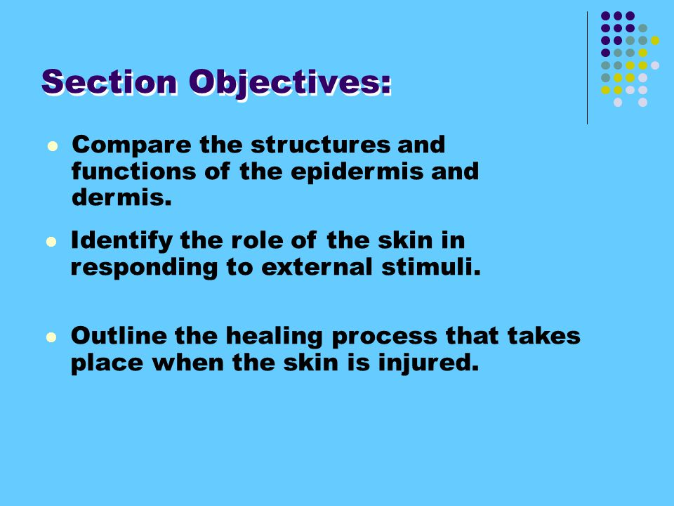 Compare the structures and functions of the epidermis and dermis.