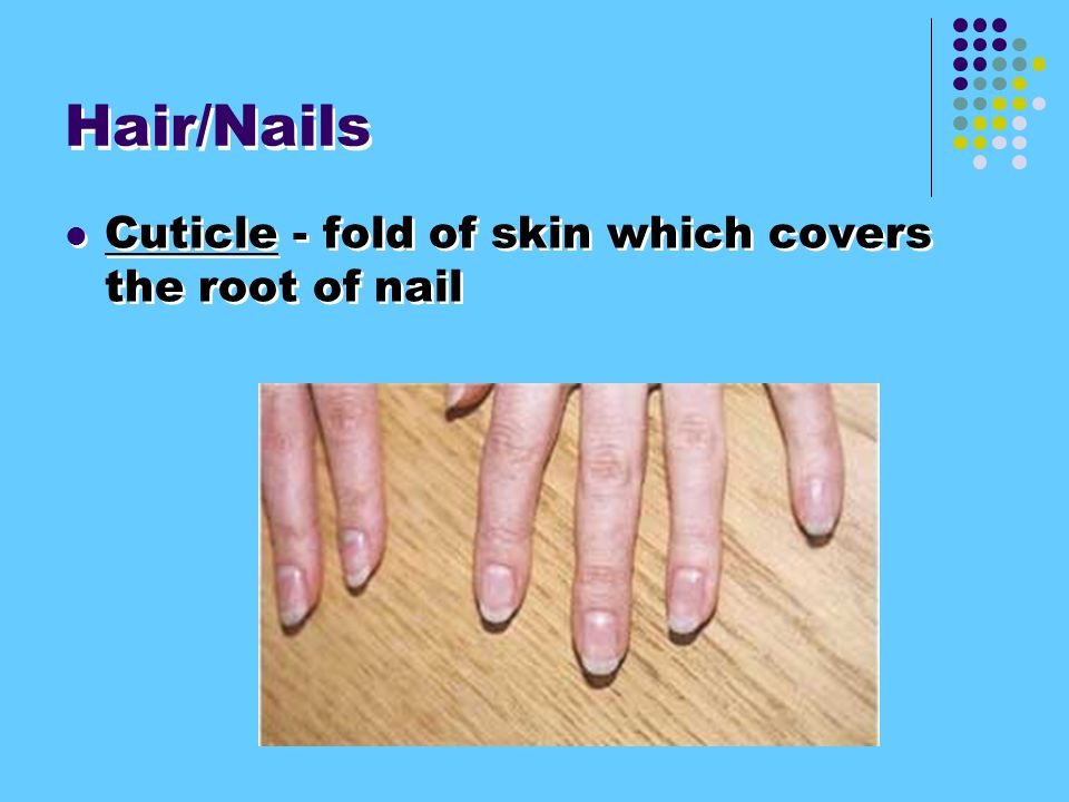 4. Hair/ Nails made of dead epidermal cells made of keratin.