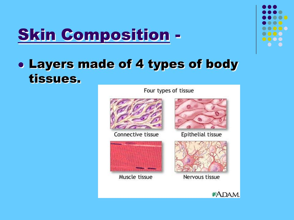 4 Types of Body Tissue 1. Connective tissue. (Types are bone, tendon, cartilage, fat and blood.) 2. Muscle tissue 3. Epithelial tissue 4. Nervous tiss