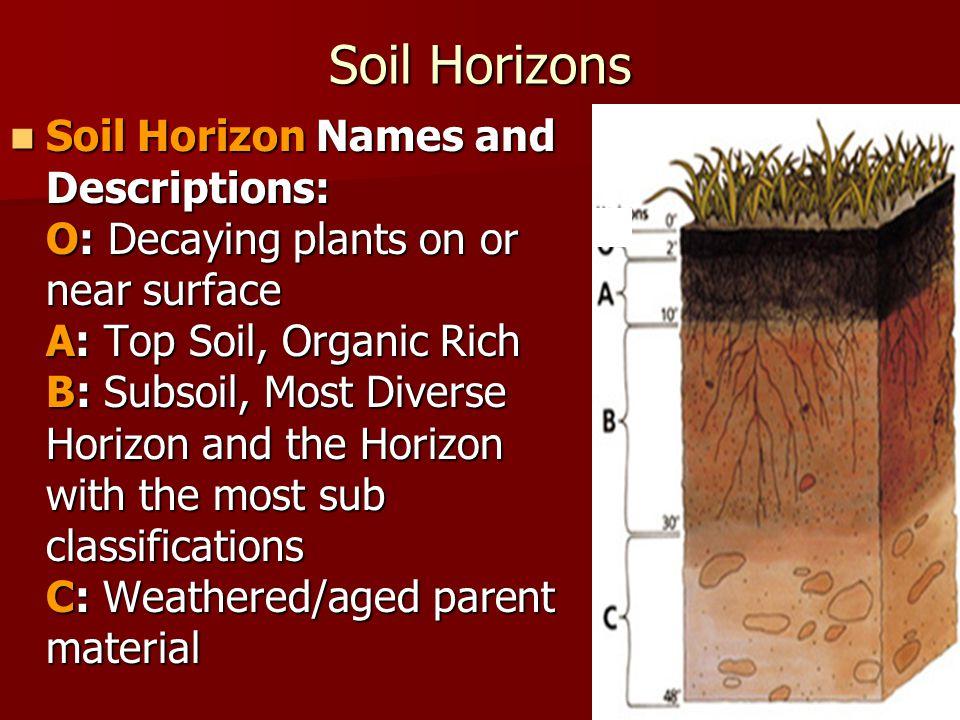 Soil Horizons Soil Horizon Names and Descriptions: O: Decaying plants on or near surface A: Top Soil, Organic Rich B: Subsoil, Most Diverse Horizon an