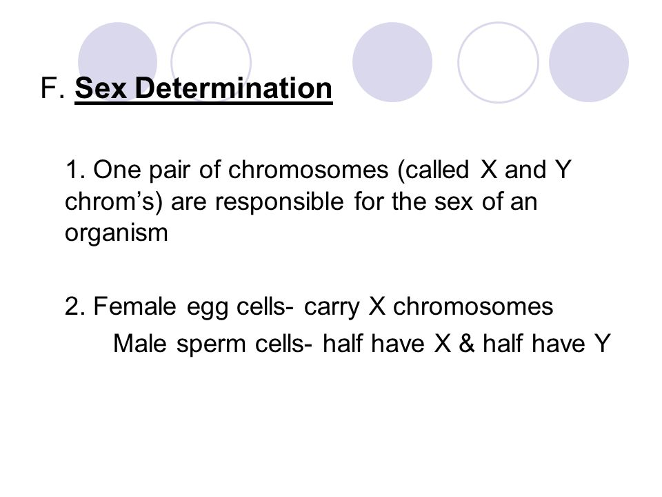 F. Sex Determination 1. One pair of chromosomes (called X and Y chrom's) are responsible for the sex of an organism 2. Female egg cells- carry X chrom