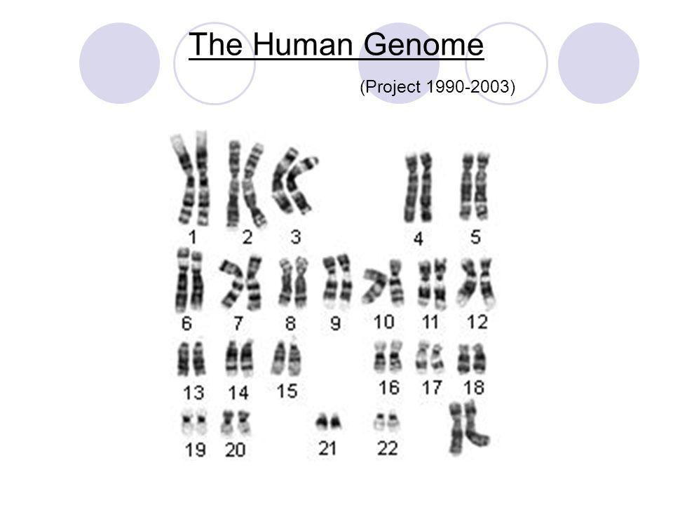Ch 5.3 – Advances in Genetics A.