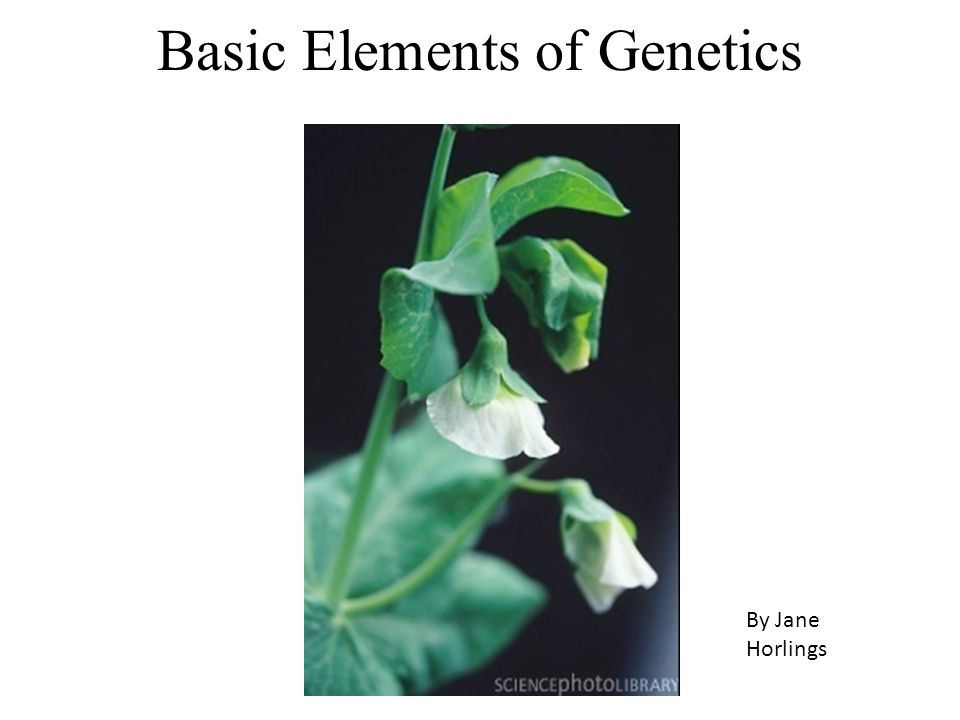 Basic Elements of Genetics By Jane Horlings
