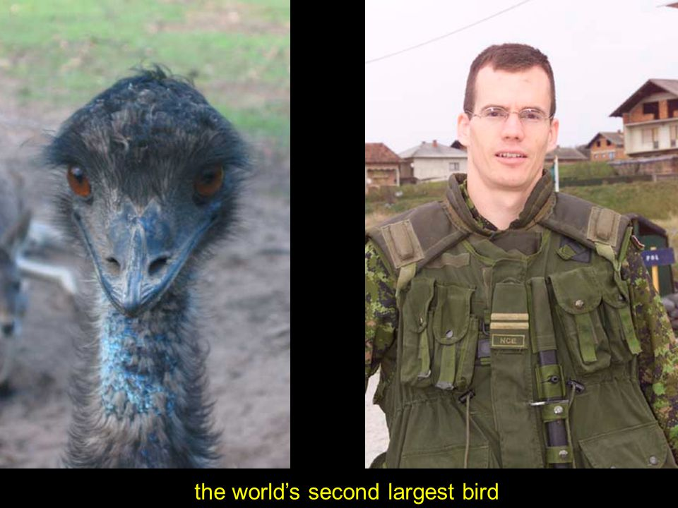 the world's second largest bird