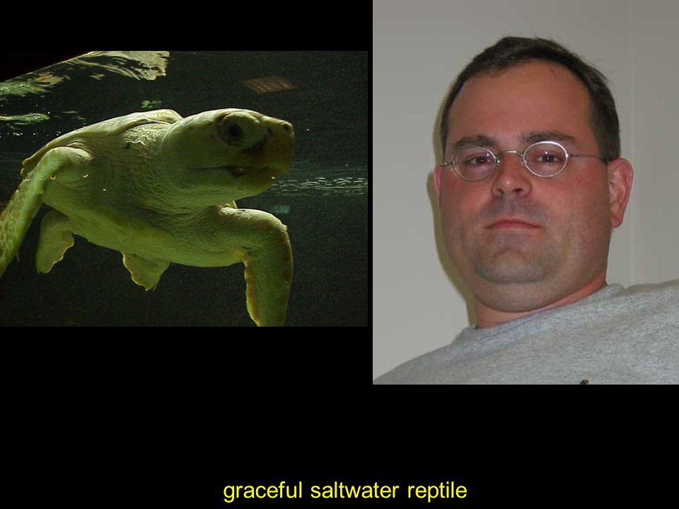 graceful saltwater reptile