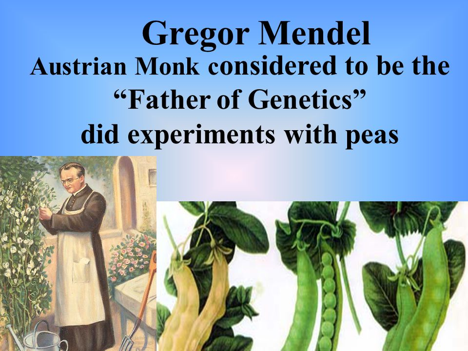 Austrian Monk c onsidered to be the Father of Genetics did experiments with peas Gregor Mendel