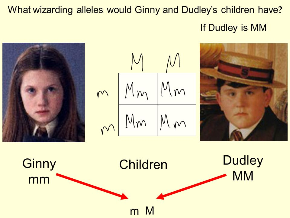 What wizarding alleles would Ginny and Dudley's children have .