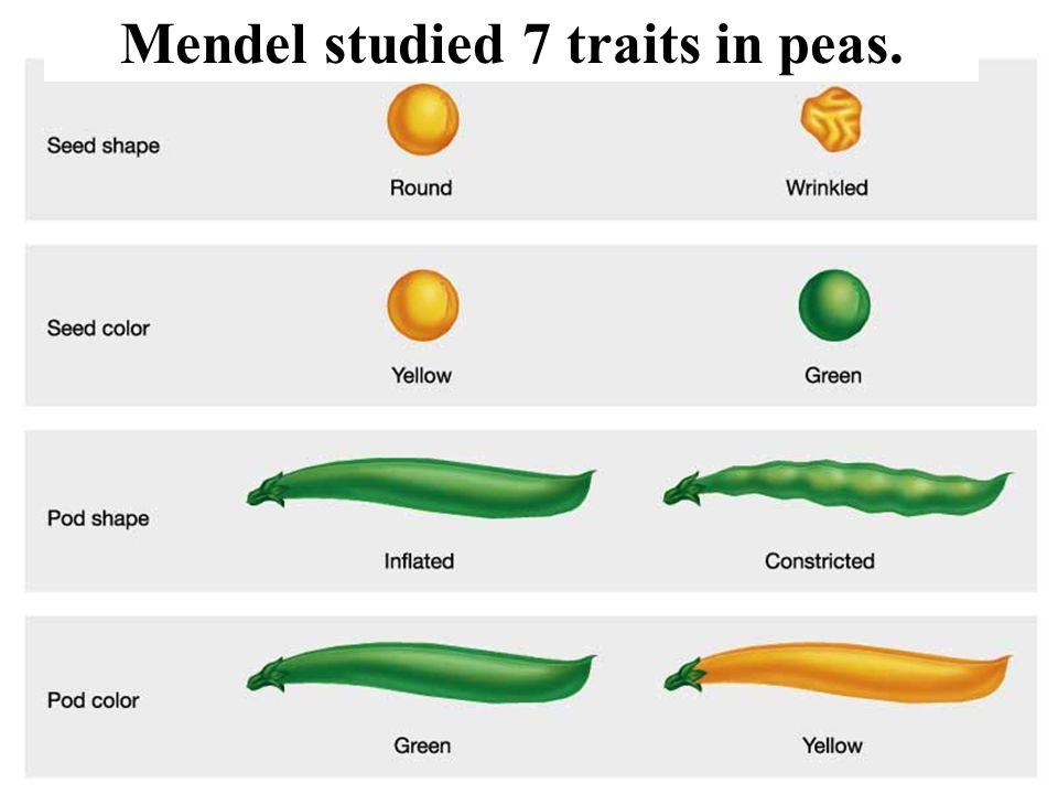 Mendel studied 7 traits in peas.