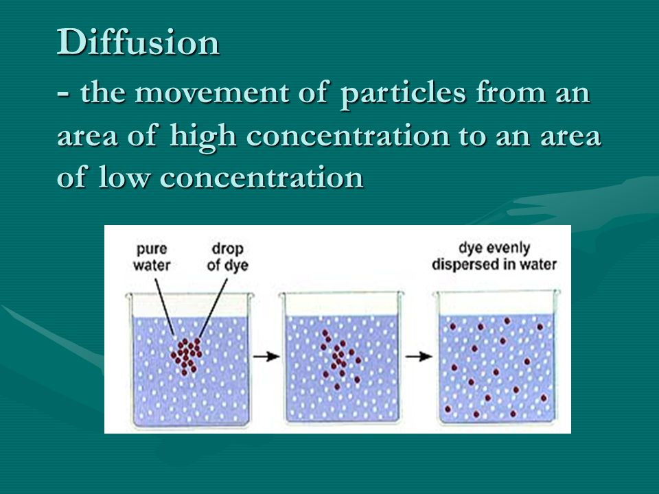 Summary Section 2 – pages 152-156 Diffusion in living systems The difference in concentration of a substance across space is called a concentration gr