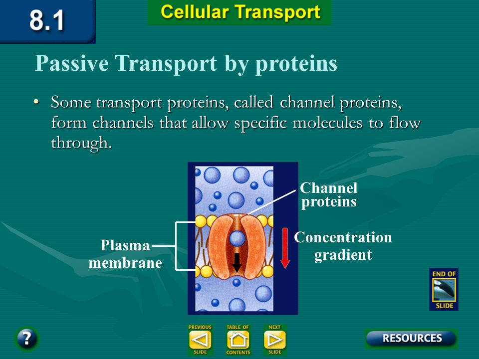 Section 8.1 Summary – pages 195 - 200 Passive Transport by proteins Passive transport of materials across the membrane using transport proteins is cal