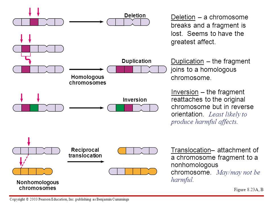 Copyright © 2003 Pearson Education, Inc. publishing as Benjamin Cummings Figure 8.23A, B Deletion Duplication Inversion Homologous chromosomes Recipro