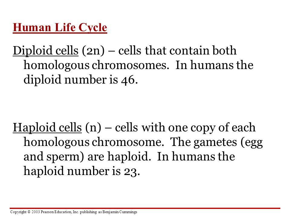 Copyright © 2003 Pearson Education, Inc. publishing as Benjamin Cummings Human Life Cycle Diploid cells (2n) – cells that contain both homologous chro