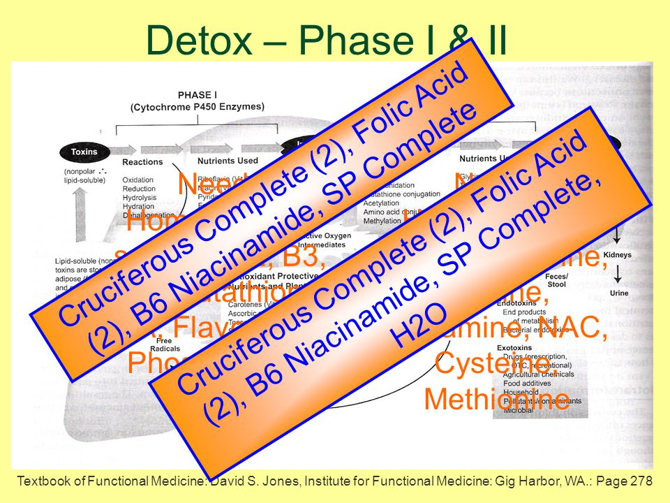 Phase I & II detoxification occur principally in the liver, while Phase I, II, & III occur in every cell – the liver determines the foundational capacity to cleanse