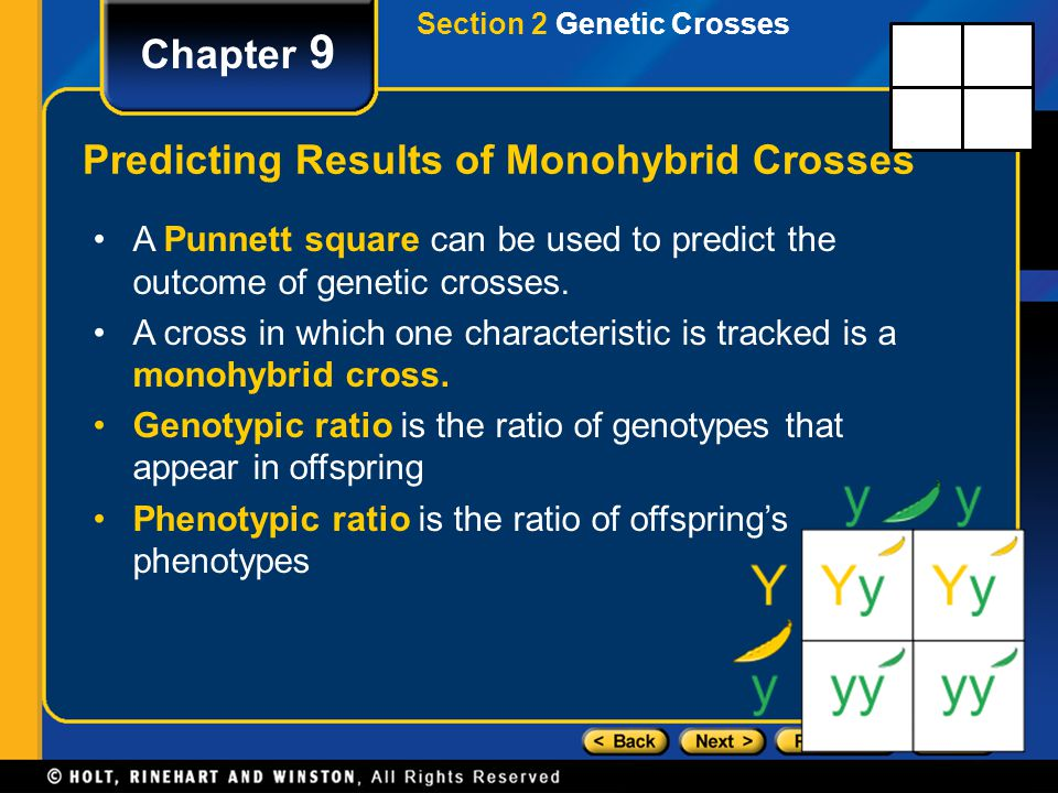 Section 2 Genetic Crosses Chapter 9 Predicting Results of Monohybrid Crosses A Punnett square can be used to predict the outcome of genetic crosses. A