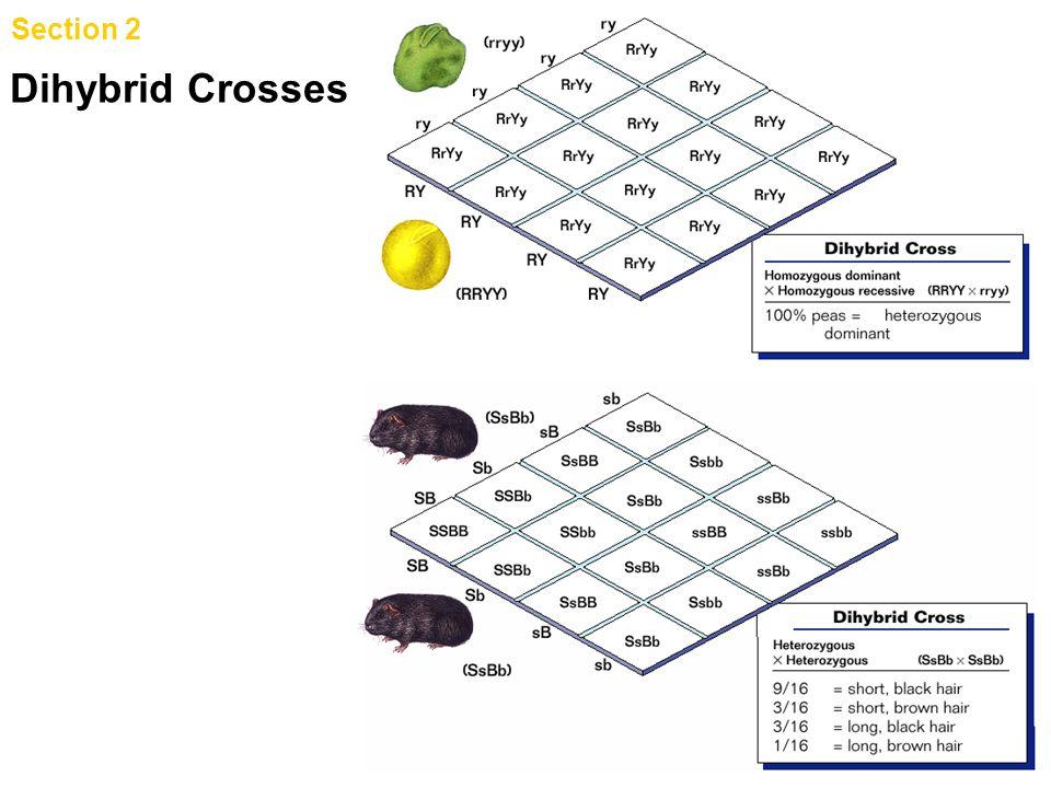 Chapter 9 Dihybrid Crosses Section 2 Genetic Crosses