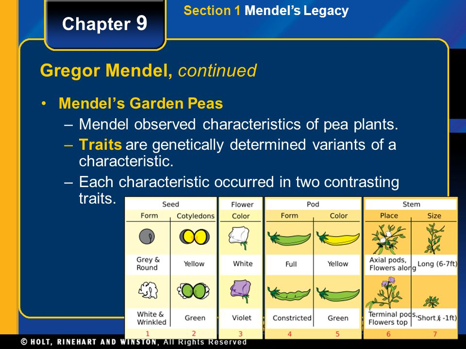 Section 2 Genetic Crosses Chapter 9 Probability Probability is the likelihood that a specific event will occur.