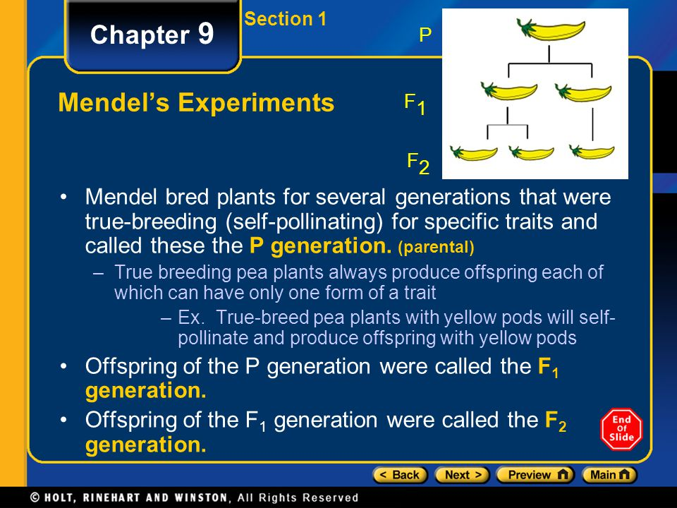 Section 1 Chapter 9 Mendel's Experiments Mendel bred plants for several generations that were true-breeding (self-pollinating) for specific traits and