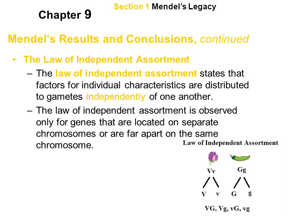 Section 2 Genetic Crosses Chapter 9 Predicting Results of Monohybrid Crosses, continued Complete dominance occurs when heterozygous individuals and dominant homozygous individuals are indistinguishable in phenotype.