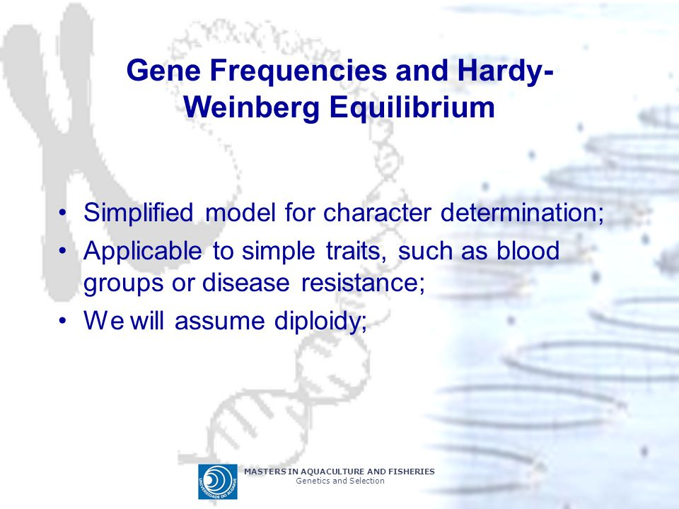 MASTERS IN AQUACULTURE AND FISHERIES Genetics and Selection Gene Frequencies and Hardy- Weinberg Equilibrium Simplified model for character determinat