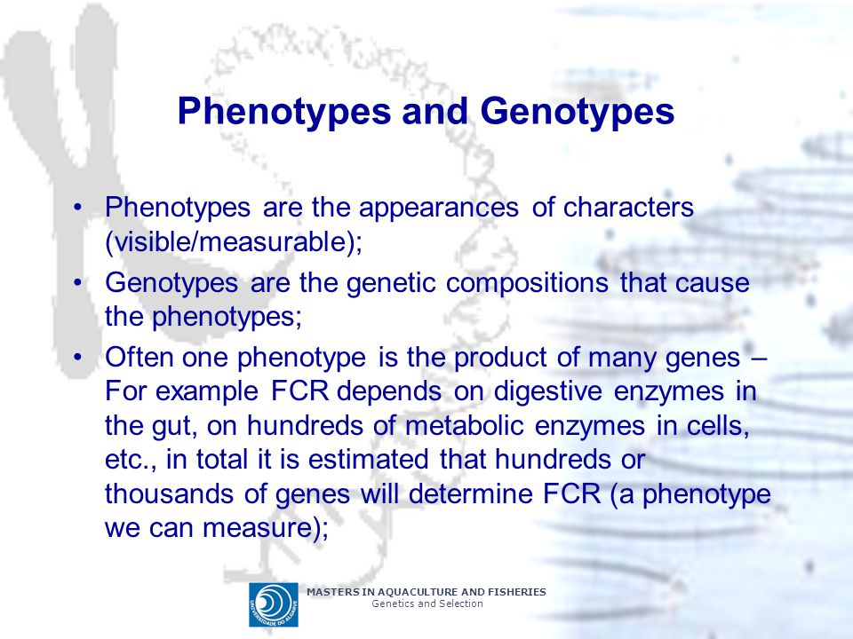 MASTERS IN AQUACULTURE AND FISHERIES Genetics and Selection Phenotypes and Genotypes Phenotypes are the appearances of characters (visible/measurable)